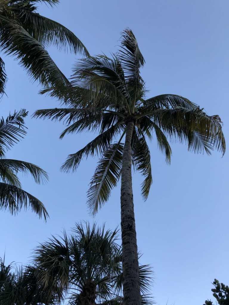Art Week in Miami